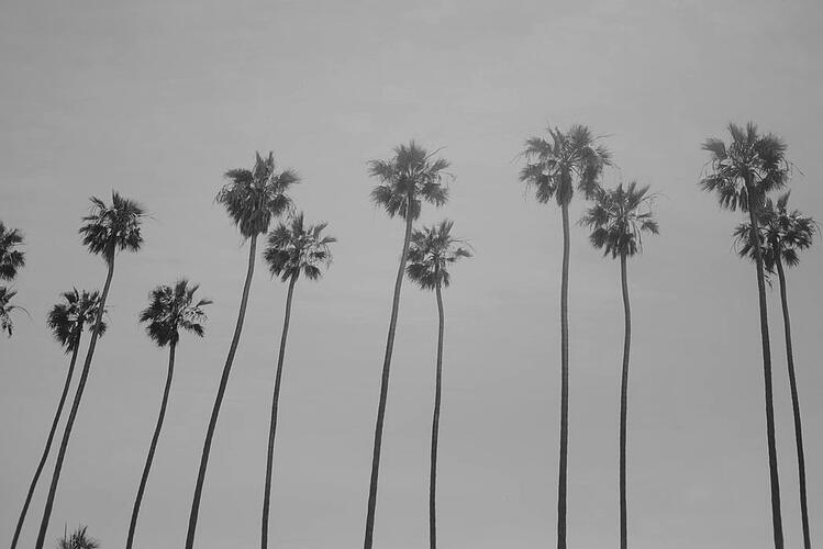 california-bw
